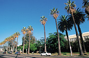 Featured Art - Palm Trees On Street , Los Angeles , California , Usa by W. Buss