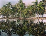 Reflections In Water Prints - Palm Trees Reflected In The Water Print by Maynard Owen Williams