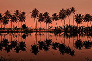 In A Row Art - Palm Trees Reflection by © Arvind Balaraman