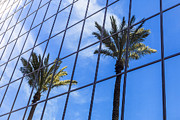 Glass Reflecting Metal Prints - Palm Trees Reflection on Glass Office Building Metal Print by Paul Velgos
