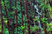 Epiphyte Photo Prints - Palm Trunks and Waterfall El Yunque Print by Thomas R Fletcher