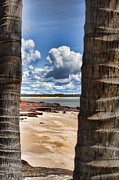 Dundee Photos - Palm Window by Douglas Barnard