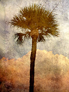 Tree Prints - Palmetto  5 Print by Susanne Van Hulst