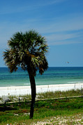 Panama City Beach Fl Framed Prints - Palmetto and the Beach Framed Print by Susanne Van Hulst