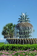 Pineapple Prints - Palmetto Fountain Print by Suzanne Gaff
