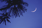 Night Photography Posters - Palms And Crescent Moon Poster by Anne Rippy