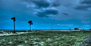 Orange Digital Art Originals - Palms and the Gulf Shore Pier by Michael Thomas