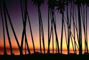 Surf Silhouette Framed Prints - Palms At Sunset Framed Print by William Waterfall - Printscapes