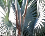 Florida Flowers Photos - Palms Bursting by Chris Andruskiewicz