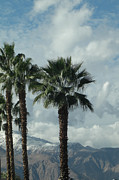 Sky Mountaintops Posters - Palms Clouds Mountains and Snow Poster by Deborah Smolinske