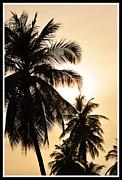Palms Print by Mark Britten