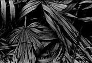 Fine Art Photograph Art - Palms by Michael L Kimble