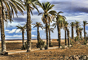 Rabat Framed Prints - Palms Morocco I Framed Print by Chuck Kuhn