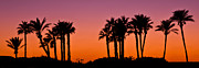 Palms Photos - Palms Silhouettes at Sunset by Nadya Ost