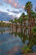 Calm Waters Photo Prints - Palms Trees over Papago Lake Print by Dave Dilli