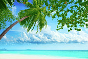 Palmtree Posters - Palmtree on the beach Poster by MotHaiBaPhoto Prints