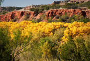 Tx Framed Prints - Palo Duro Canyon Fall Colors Framed Print by Fred Lassmann