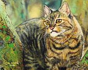 Palo Verde Kitty Print by Baron Dixon