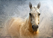 Quarterhorses Posters - Palomino Poster by Betty LaRue