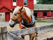Fence Prints - Palomino By Red Barn Print by Susan Savad