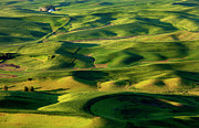 Furrows Framed Prints - Palouse Contours Framed Print by Mike  Dawson