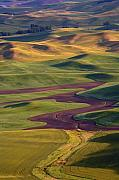 Furrows Framed Prints - Palouse Hills Framed Print by Mike  Dawson