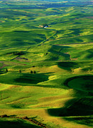 Rolling Hills Framed Prints - Palouse Morning Framed Print by Mike  Dawson