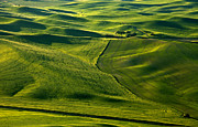 Crop Lines Art - Palouse Patterns by Mike  Dawson