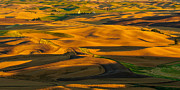 Golden Brown Posters - Palouse Shadow Play Poster by Dan Mihai
