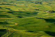 Wheatfields Photo Prints - Palouse Spring Print by Mike  Dawson
