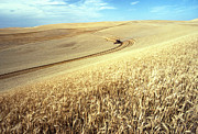 Palouse Wheat Print by USDA and Photo Researchers