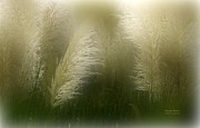 Pampas Grass Framed Prints - Pampas Dream Framed Print by Carol Cavalaris