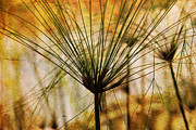 Pampas Grass Framed Prints - Pampas Grass Framed Print by Susanne Van Hulst