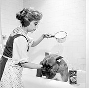 Domestic Bathroom Posters - Pampered Pup Poster by Flecknoe