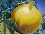 Grapefruit Painting Prints - Pamplemousse Print by Muriel Dolemieux