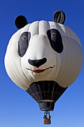 Basket Head Posters - Panda Bear Hot Air Balloon Poster by Garry Gay