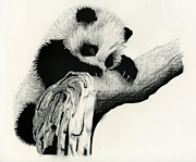 Spray Drawings - Panda Cub by Chris Trudeau