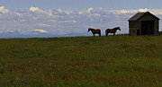 Shed Posters - Panorama Of Alberta Poster by Al Bourassa