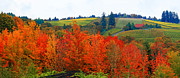 Grapevines Posters - Panorama of The Red Hills of Dundee Oregon Poster by Margaret Hood