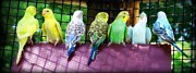 Jamie Kerns - Panorama Parrot Party