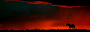 Panoramic Digital Art - Panoramic Horse Sunset by Mark Duffy