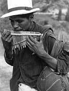 Only Mid Adult Men Posters - Panpipe Player Poster by Three Lions