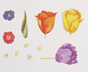 Painted Image Prints - Pansies And Tulips Print by Digital Vision.