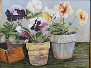 Cindy Plutnicki - Pansies