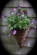 Brightly Colored Pansies - Pansies In A Basket by Lynn-Marie Gildersleeve