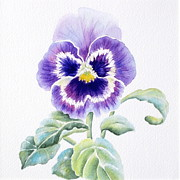 Purple Pansy Prints - Pansy Print by Deborah Ronglien