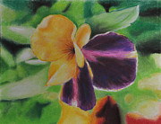 Vibrant Colors Pastels Prints - Pansy Print by Evelyn Butler