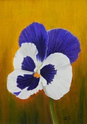 Botanical Pastels Originals - Pansy by Xenia Sease