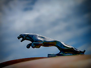 Vintage Hood Ornament Digital Art Metal Prints - Panther Hoodie Metal Print by Douglas Pittman