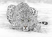 Feline Mixed Media Metal Prints - Panthera Pardus - Leopard Metal Print by Steven Paul Carlson